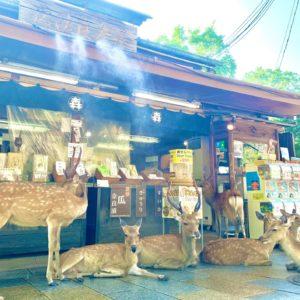 森奈良漬店 鹿たちの涼み場所